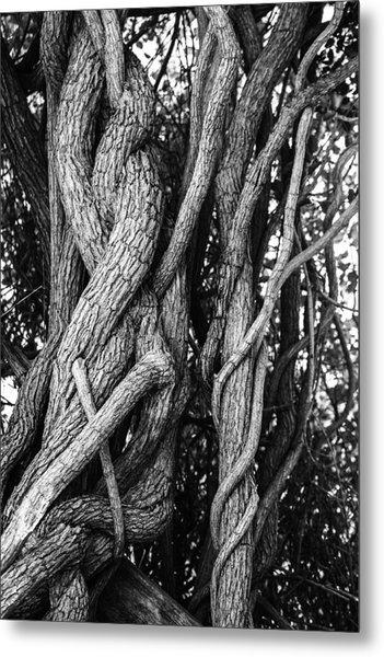 Embracing Rooted Love Metal Print by Luna Curran
