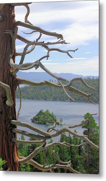 Emerald Bay Through Cedar Metal Print by Mickey Hatt
