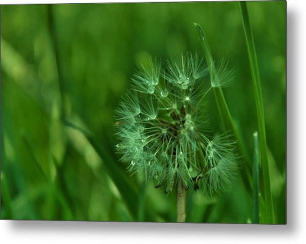 Emeralds Metal Print by Anna  McAlister