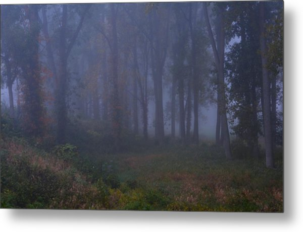 Enchanted Forest Two Metal Print