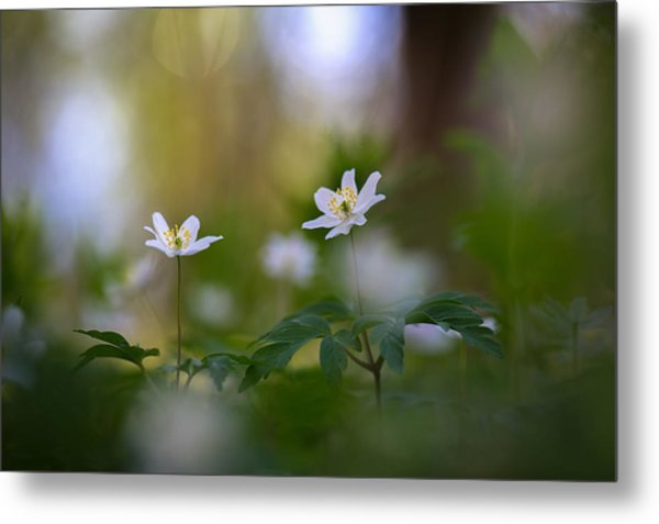 Enchanted Spring Metal Print