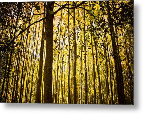 Enchanted Woods Metal Print