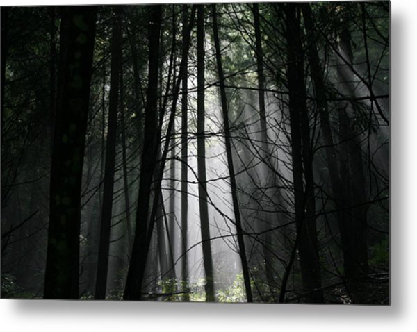 Encounter Of The Vermont Kind No.2 Metal Print