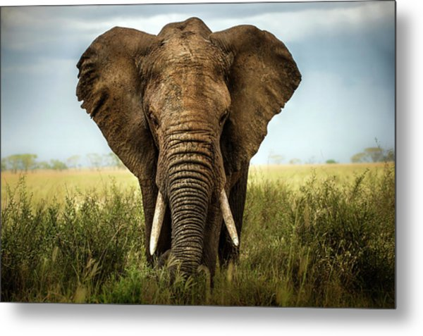 Encounters In Serengeti Metal Print
