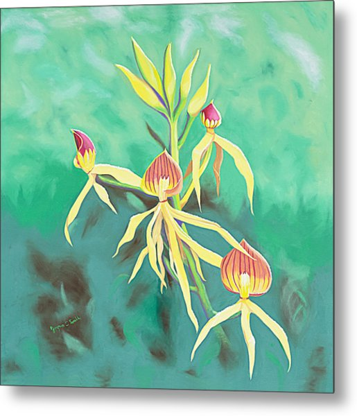 Encyclia Cochleata Orchid Metal Print by Joyce Small