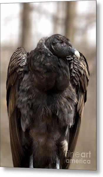Endangered Andean Condor Metal Print