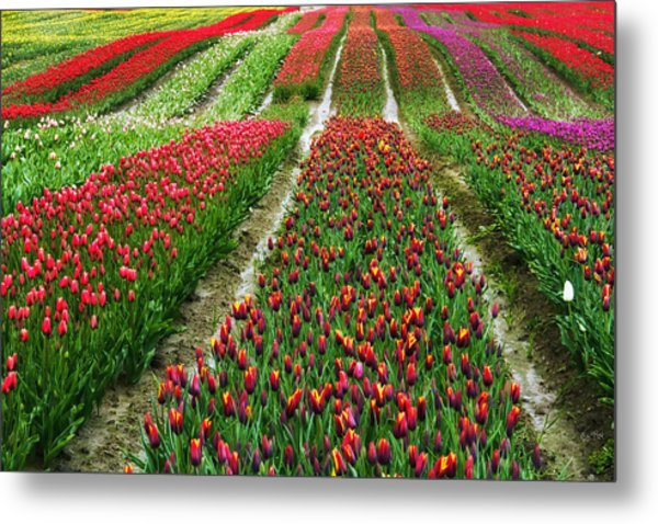 Endless Waves Of Tulips Metal Print