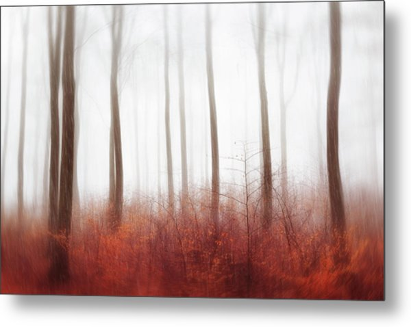Endless Woods Metal Print