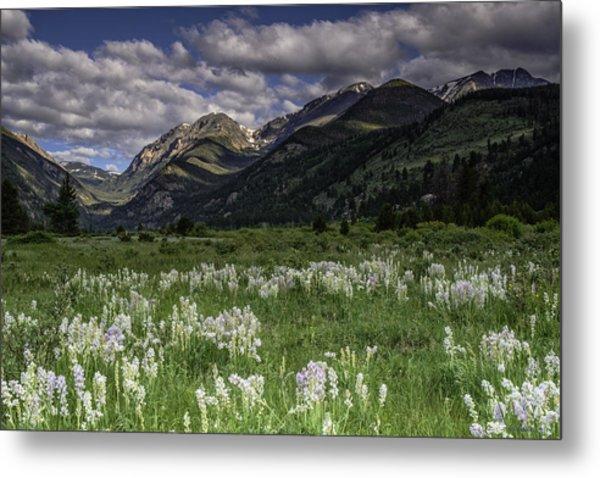 Endo-valley Meadow  Metal Print by Tom Wilbert
