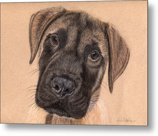 English Mastiff Puppy Metal Print by Nicole I Hamilton