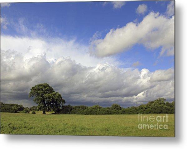 English Oak Under Stormy Skies Metal Print