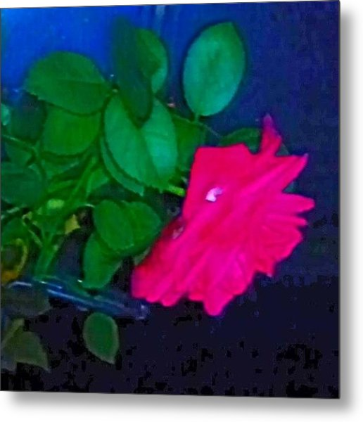 English Rose 2 Metal Print