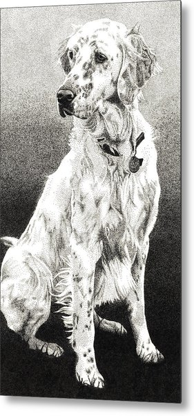 Metal Print featuring the drawing English Setter by Rob Christensen