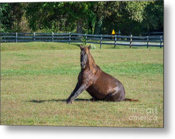 Equestrian Beauty Metal Print