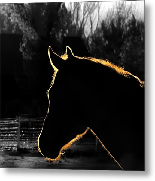 Equine Glow Metal Print