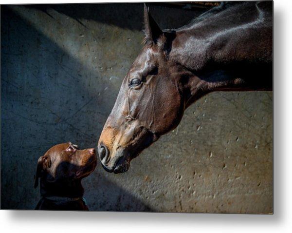 Equine Meets Canine Metal Print by Sharon Lee Chapman