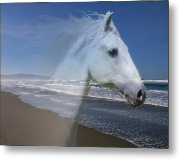 Equine Shores Metal Print