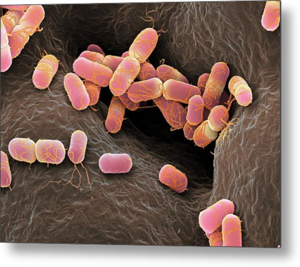Escherichia Coli Bacteria Metal Print by Martin Oeggerli/science Photo Library