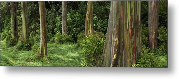 Eucalyptus Dream Metal Print