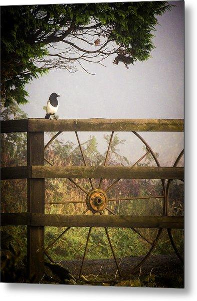 Eurasian Magpie In Morning Mist Metal Print