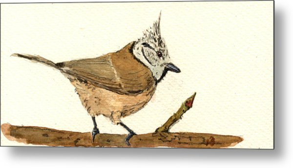 European Crested Tit Metal Print
