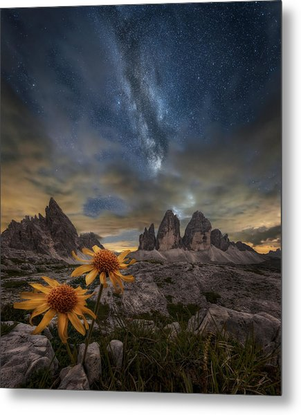 Even The Flowers Seem To Be Fascinated By The Stars Metal Print
