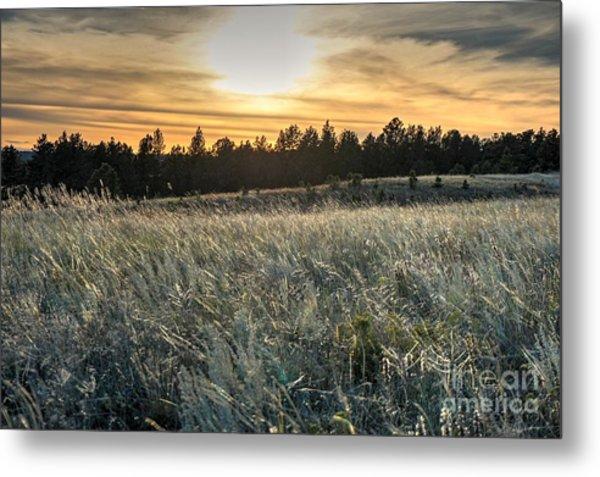 Evening Grasses In The Black Hills Metal Print