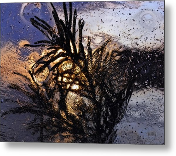 Metal Print featuring the photograph Evening Plant by Sami Tiainen