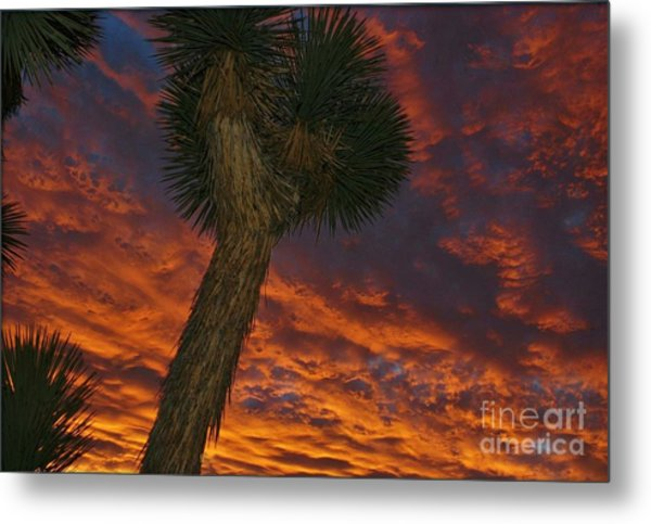 Evening Red Event Metal Print