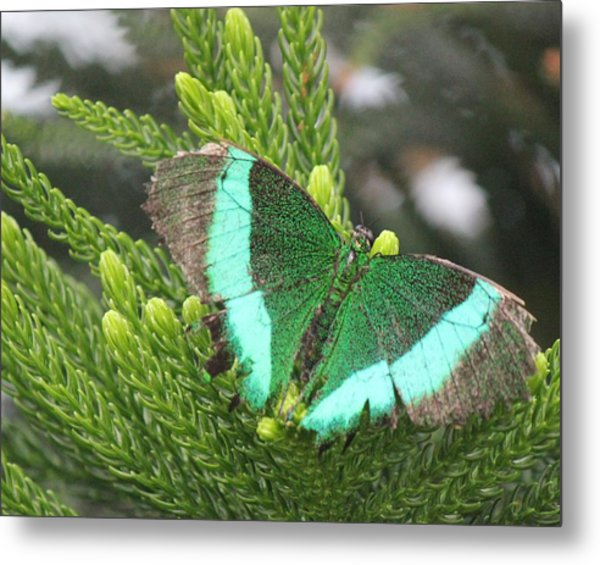 Ever Green Butterfly Metal Print