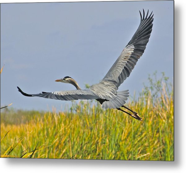 Everglades Flight Metal Print