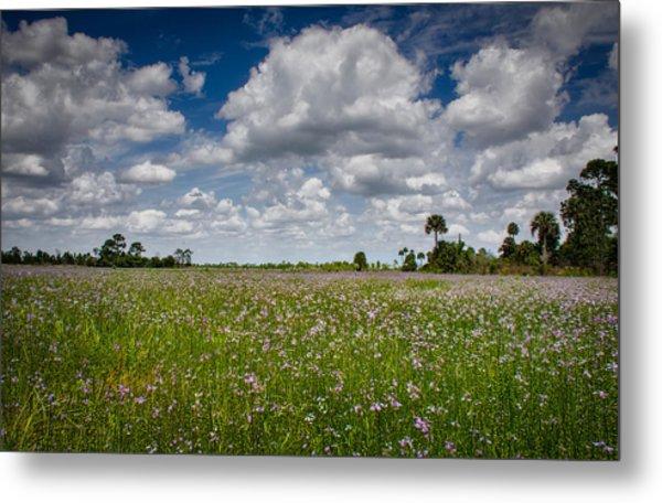 Everglades Spring Metal Print