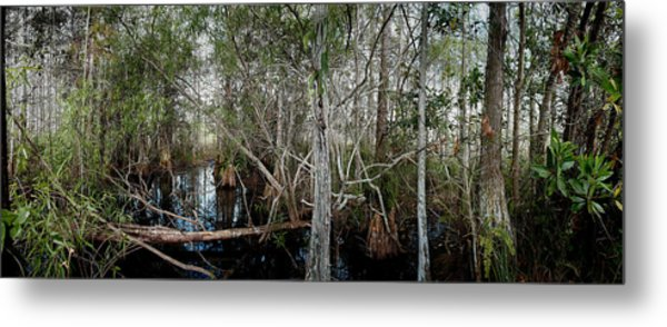 Everglades Swamp-1 Metal Print