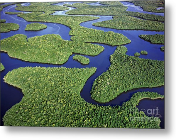 Everglades Waterways Metal Print