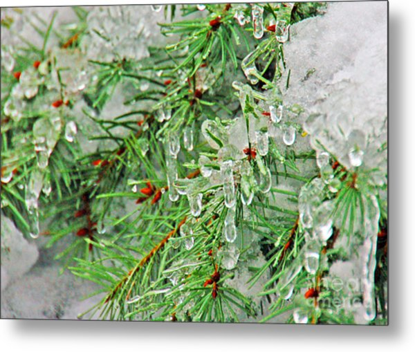 Evergreen Icicles II Metal Print