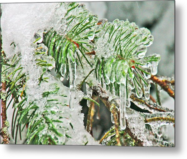Evergreen Icicles IIi Metal Print