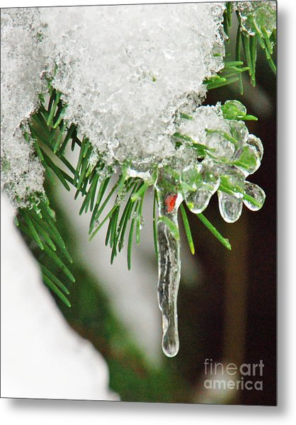 Evergreen Icicles Iv Metal Print