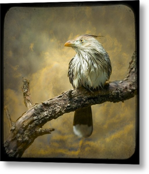 Metal Print featuring the photograph Exotic Bird - Guira Cuckoo Bird by Gary Heller
