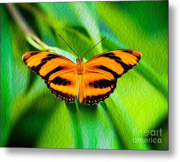 Extended Wings Of The Banded Orange Tiger Heliconian Butterfly  Metal Print