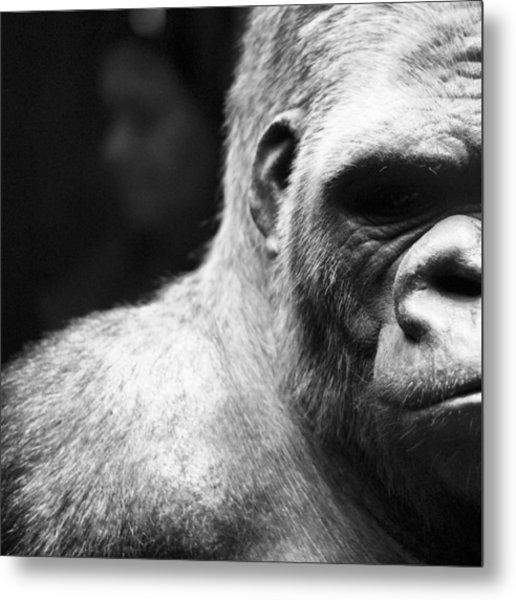 Extreme Close-up Of Gorilla Metal Print by Ali Roshanzamir / Eyeem
