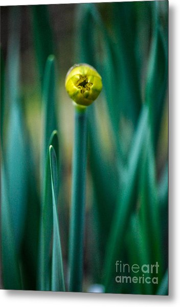 Eye Of The Daffodil Metal Print