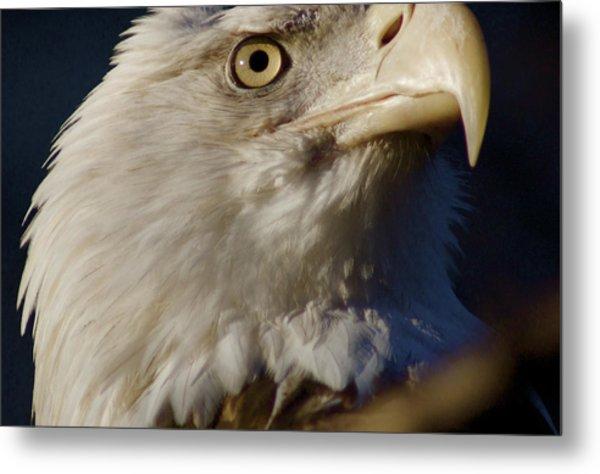 Eye Of The Eagle Metal Print