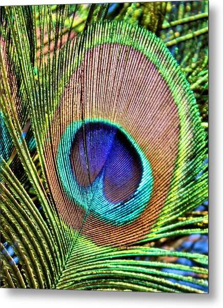 Eye Of The Feather Metal Print