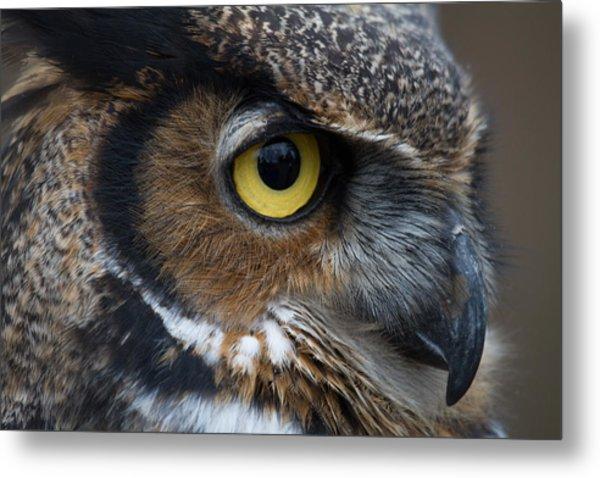 Eye Of The Owl Metal Print by Craig Brown