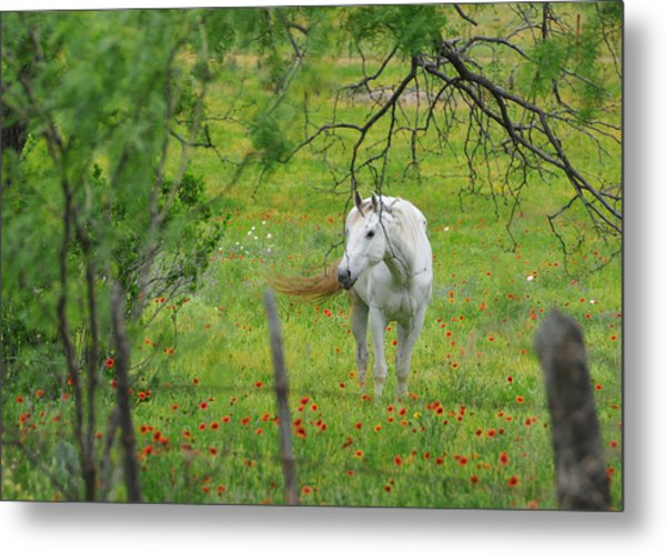 Eye On Beauty Metal Print