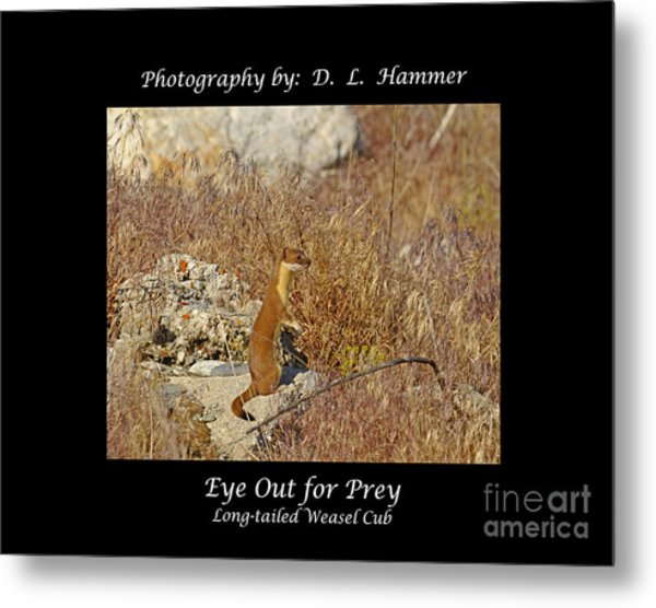 Eye Out For Prey Metal Print by Dennis Hammer