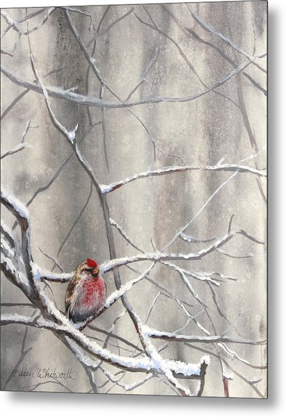 Eyeing The Feeder Alaskan Redpoll In Winter Metal Print