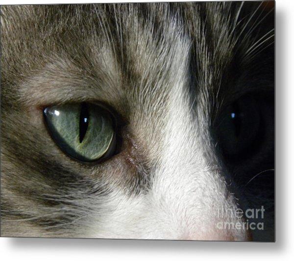 Eyes 5 Metal Print by Laura Yamada