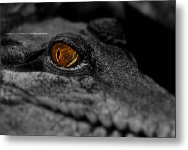 Eyes For You Metal Print by Andrew Prince