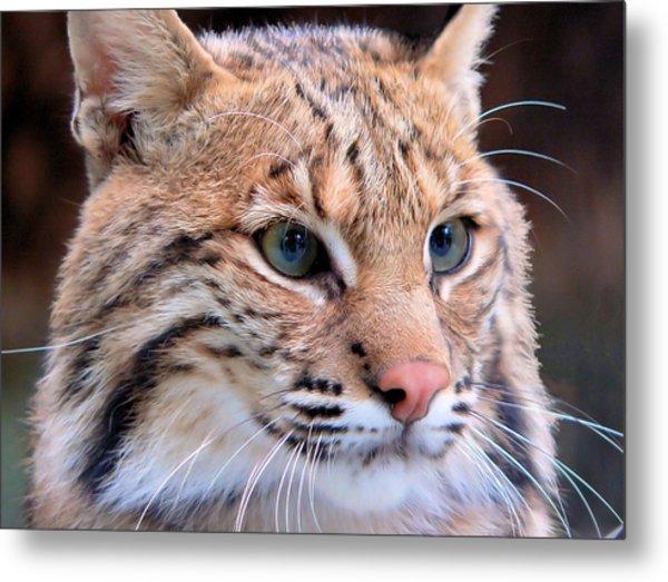 Eyes Of A Lynx Metal Print